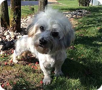 Dandie Dinmont Terrier Mix Dog for adoption in Mechanicsburg, Ohio - Isaac