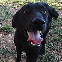 Retriever (Unknown Type) Mix Dog for adoption in Melbourne, Arkansas - Winston