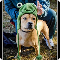 Adopt A Pet :: Leah - Indian Trail, NC