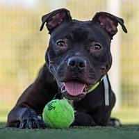 Adopt A Pet :: Wasabi - San Ramon, CA