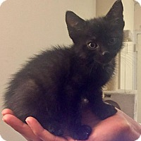 Adopt A Pet :: Saturn - New York, NY