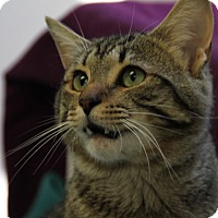 Adopt A Pet :: Smokey - Greensboro, NC