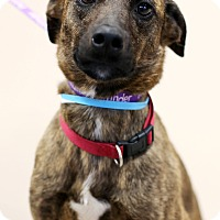 Adopt A Pet :: Mia *Petsmart GB* - Appleton, WI