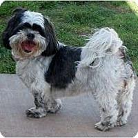 Adopt A Pet :: Molly - San Angelo, TX