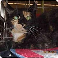 Adopt A Pet :: Fiona - Riverside, RI