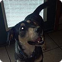 Adopt A Pet :: Kyra - Morgantown, WV