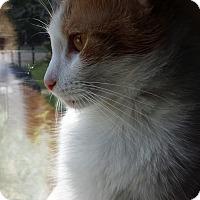 Adopt A Pet :: Marigold - Indianapolis, IN