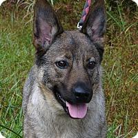 Adopt A Pet :: Princess - Stroudsburg, PA
