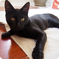 Adopt A Pet :: Chuck - Chicago, IL