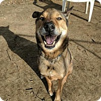 Adopt A Pet :: Wiley - Armonk, NY