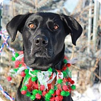 Adopt A Pet :: Dax - Spanish Fork, UT