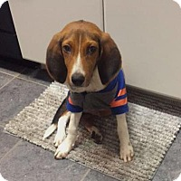 Adopt A Pet :: Winston - Gainesville, FL