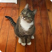 Adopt A Pet :: Oma - Toronto, ON