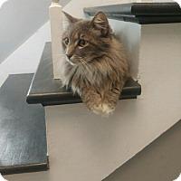 Adopt A Pet :: Bunz - Kenner, LA