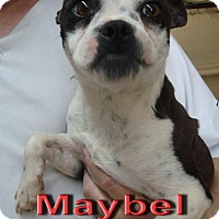 Adopt A Pet :: Maybel - Coleman, TX