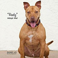 Adopt A Pet :: Rudy - Wichita, KS