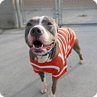 Adopt A Pet :: MIA - Brooklyn, NY