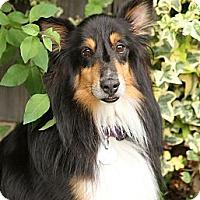 Adopt A Pet :: Moss - La Habra, CA