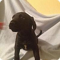 Adopt A Pet :: Frank - Leesburg, VA