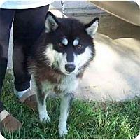 Adopt A Pet :: Shiloh - Belleville, MI