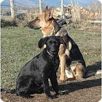 Adopt A Pet :: Gunnar - Hamilton, MT