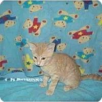 Adopt A Pet :: Fazier - Orlando, FL