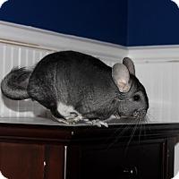 Adopt A Pet :: Toby - Granby, CT