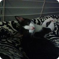 Adopt A Pet :: Eve - Seminole, FL