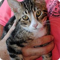 Adopt A Pet :: Stormy - Palmdale, CA