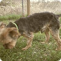 Adopt A Pet :: HENRY - Medford, WI
