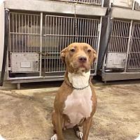 Adopt A Pet :: BABY ( JILL) - Upper Sandusky, OH