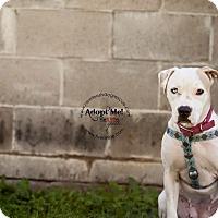 Adopt A Pet :: Chacole - La Crosse, WI