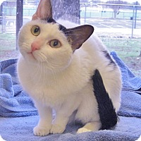 Adopt A Pet :: Spirit - Georgetown, TX