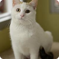 Adopt A Pet :: Avacyn170092 - Atlanta, GA