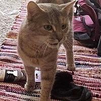 Adopt A Pet :: TABITHA - Woodstock, GA