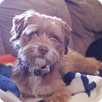 Adopt A Pet :: Wicket - Ogden, UT