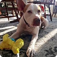 Adopt A Pet :: Marge - Grand Rapids, MI