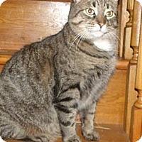 Adopt A Pet :: Austin - Cambridge, ON