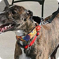 Adopt A Pet :: L's Natedawg