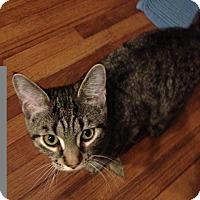 Adopt A Pet :: Josh - Byron Center, MI