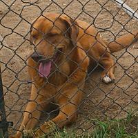 Adopt A Pet :: Zeva - Nashville, GA