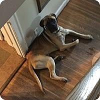 Adopt A Pet :: Rudy - St. Louis, MO
