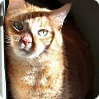 Adopt A Pet :: Mico - Ann Arbor, MI