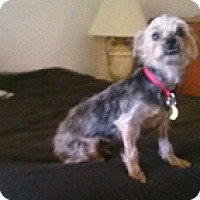 Adopt A Pet :: WILLA - Melbourne, FL