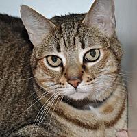 Adopt A Pet :: Linnette - Roseville, CA