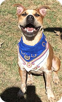 Boxer/Australian Cattle Dog Mix Dog for adoption in Conroe, Texas - Bryson