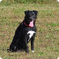 Terrier (Unknown Type, Medium) Mix Dog for adoption in Lebanon, Missouri - Delta