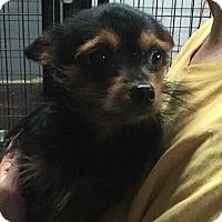 Adopt A Pet :: Miss Ann - Henderson, KY