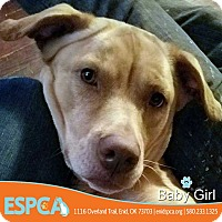 Adopt A Pet :: Baby Girl - Enid, OK