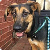 Adopt A Pet :: Elsie - CUMMING, GA